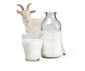 susu-kambing-etawa